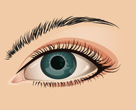 Female eye close-up. Illustration of a womans eye in a close-up view Stock Photography
