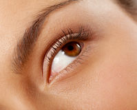 Female eye close-up Stock Images
