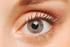 Female eye closeup. Stock Image
