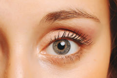 Female eye closeup. Stock Images