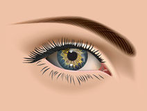 Female eye. Eye closeup. Vector Stock Photo