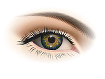 Female eye closeup. Vector Royalty Free Stock Photos