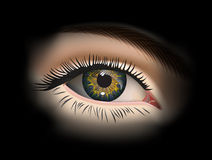 Female eye closeup. Vector. Female eye. Eye closeup. Vector Stock Photos