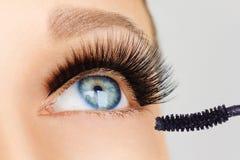 Female eye with extreme long eyelashes and brush of mascara. Make-up, cosmetics, beauty royalty free stock photo