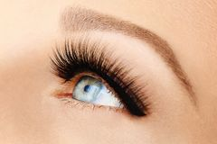 Female eye with extreme long false eyelashes and black liner. Eyelash extensions, make-up, cosmetics, beauty. Close up, macro royalty free stock photography
