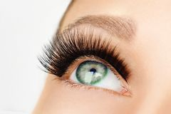 Female eye with extreme long false eyelashes and black liner. Eyelash extensions, make-up, cosmetics, beauty. Close up, macro royalty free stock photo