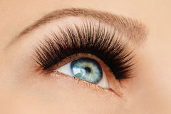 Female eye with extreme long false eyelashes and black liner. Eyelash extensions, make-up, cosmetics, beauty. Close up, macro stock photography