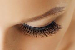 Female eye with extreme long false eyelashes. Eyelash extensions, make-up, cosmetics, beauty and skin care royalty free stock photos