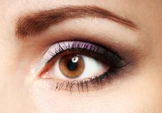 Female eye with eyelashes close up image. Eyebrows with brown woman eye. Royalty Free Stock Photo