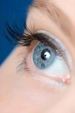 Female eye with long eyelashes Stock Images