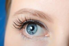 Female eye with long eyelashes close-up Stock Images