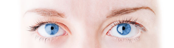 Female eye with long eyelashes Stock Image