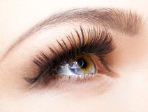 Female eye with long eyelashes. Closeup shot royalty free stock photos