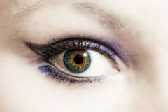 Female eye with make-up macro Stock Photography