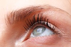 Female eye with makeup close up Royalty Free Stock Images