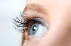 Free Female Eye With Long Eyelashes Royalty Free Stock Photo - 32071445