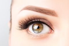 Free Female Eye With Long Eyelashes, Beautiful Makeup And Light Brown Eyebrow Close-up. Eyelash Extensions, Lamination, Microblading, Stock Images - 152618994