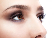 Female eye zone and brows with day makeup Royalty Free Stock Photography