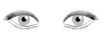 Female Eyes Full Thick Lashes. Female eyes with full, thick lashes looking at you - isolated vector illustration on white background stock illustration