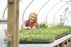 Female Farm Worker Checking Plants In Greenhouse Stock Image