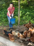 Female farm worker giving feeding stuff to chickens Stock Image
