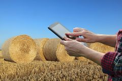 Farmer examining wheat field after harvest using tablet. Female farmer or agronomist in wheat field after harvest examining bale, rolled straw, using tablet Royalty Free Stock Images