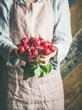 Female farmer in apron holding bunch of radish with leaves. Female farmer wearing pastel linen apron and shirt holding bunch of fresh ripe radish with leaves in Stock Images