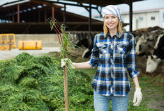 Female farmer collecting grass for cows Royalty Free Stock Photography