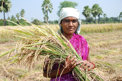 Female farmer. Content female farmer of rural India Royalty Free Stock Photo