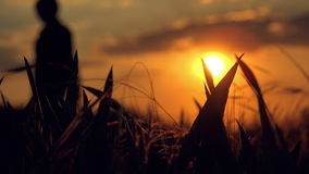 Female Farmer in Cultivated Agricultural Wheat Field in Sunset stock footage