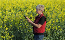 Female farmer examine blossoming rapeseed field Royalty Free Stock Photo