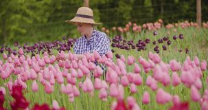 Female Farmer Examining Pink Tulip Flowers At Field. Young female farmer wearing straw hat while examining pink tulip flowers at field stock video