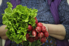 Female farmer holding lettuce and red radish Royalty Free Stock Photo