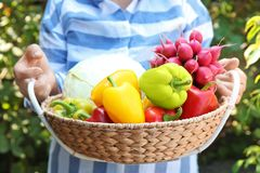 Female farmer holding wicker basket. With fresh vegetables outdoors Royalty Free Stock Photo