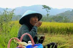 The female farmer Indonesia stock photo