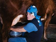 Female farmer milking a homemade cow in a barn stock image