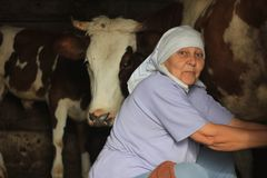 Female farmer milking a homemade cow in a barn. royalty free stock images
