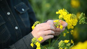 Female Farmer in Oilseed Rapeseed Cultivated Agricultural Field Examining and Controlling The Growth of Plants stock footage