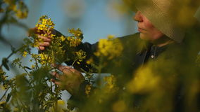 Female Farmer in Oilseed Rapeseed Cultivated Agricultural Field Examining and Controlling The Growth of Plants stock video footage