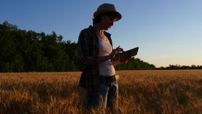A female farmer in a plaid shirt with a tablet computer in her hands checks the quality of the crop and its readiness. Woman in a wheat field at sunset stock video