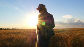 A female farmer in a plaid shirt with a tablet computer in her hands is walking across a wheat field at sunset, checking stock video