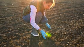 Female farmer puts a seedling prototype in the ground. Beautiful sunset on the background stock footage