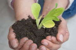 Future life. Female farmer's hands holding a young plant symbol of a future and healthy world's life Royalty Free Stock Photos