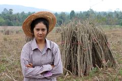 Female farmer standing and hugging chest beside the stack of tapioca limb in the farm royalty free stock photos