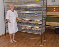 The female farmer stands near a cage with quails Stock Photos
