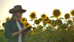 A female farmer with a tablet computer walks through a field with sunflowers and enters data into a tablet computer to