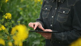 Female Farmer using Digital Tablet Computer in Oilseed Rapeseed Cultivated Agricultural Field Controlling Plants Growth stock video footage