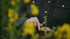 Female Farmer using Digital Tablet Computer in Oilseed Rapeseed Cultivated Agricultural Field Examining and Controlling The Growth stock footage