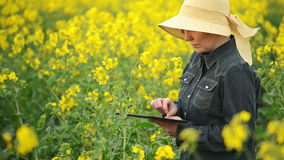 Female Farmer using Digital Tablet Computer in Oilseed Rapeseed Cultivated Agricultural Field Examining and Controlling The Growth stock video footage