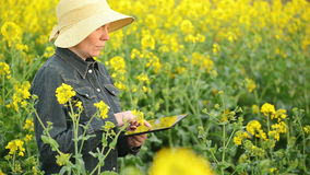 Female Farmer using Digital Tablet Computer in Oilseed Rapeseed Cultivated Agricultural Field Examining and Controlling Plants stock video